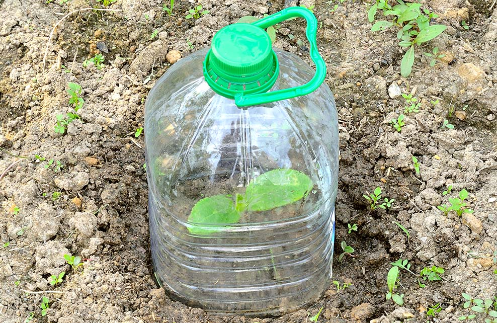bouteille plastique en guise de serre pour le jardin