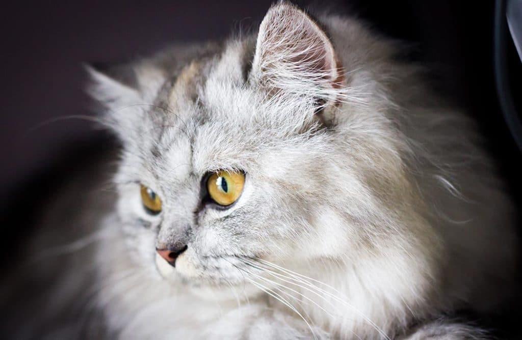 Mon chat, mon mentor : 10 raisons de l'imiter