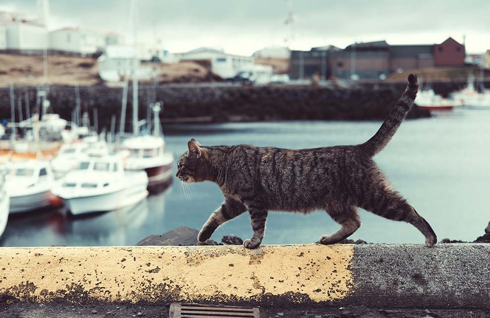 chat marchant sur le muret le long d'un port