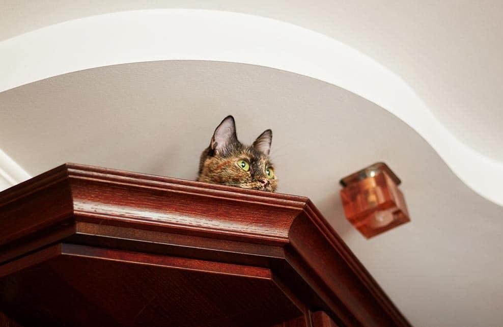 chat perché en haut d'une armoire