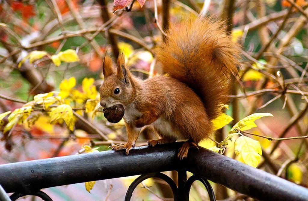 6 animaux à observer en automne