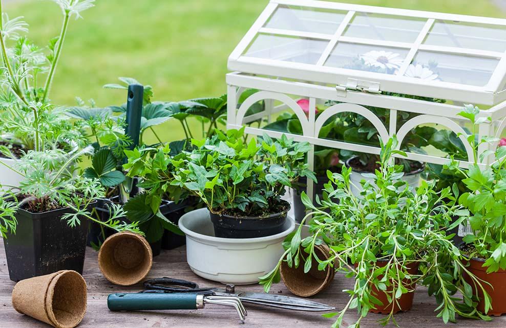 mini-serre dans jardin