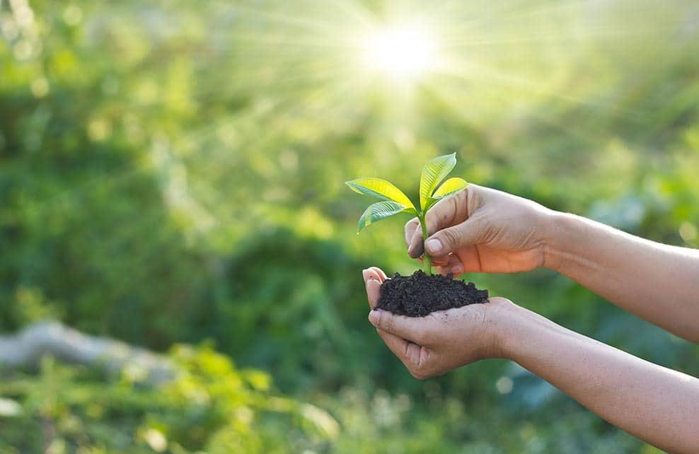 Femme qui plante un jeun plant