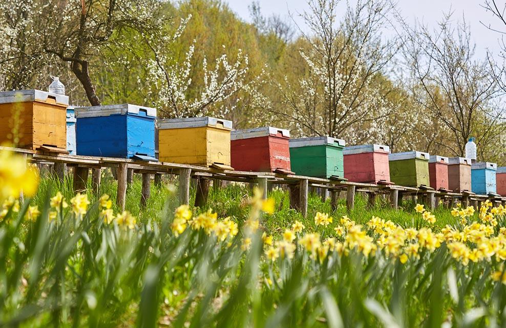 ruches dans un jardin