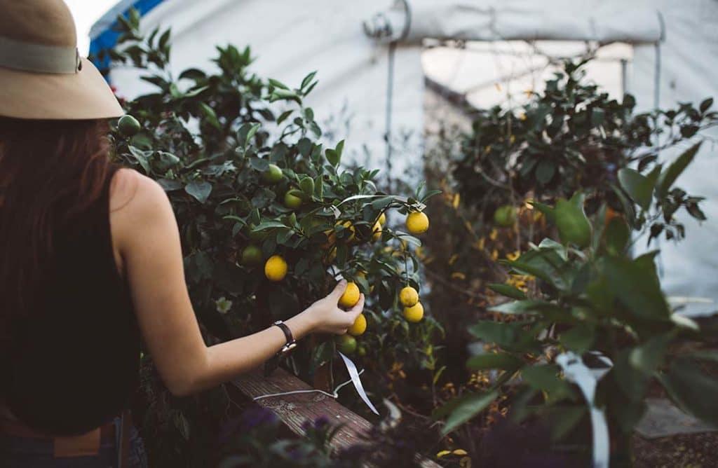 Les 10 commandements de l'agriculture urbaine