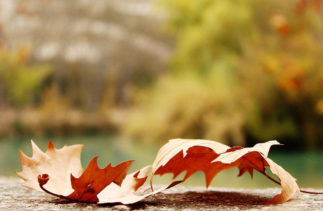Top 10 des balades à faire en France à l'automne