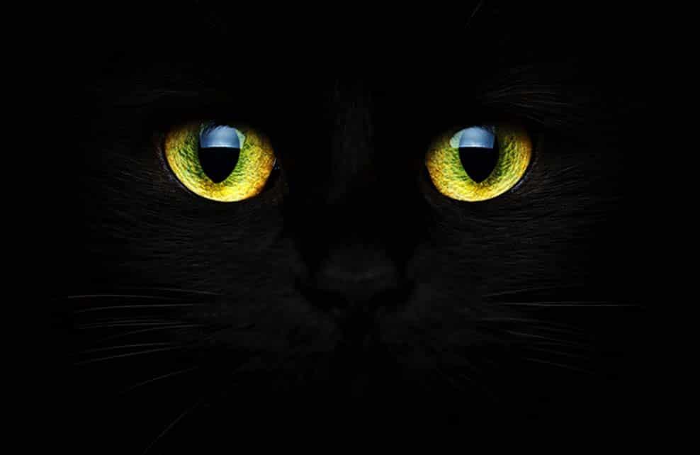 chat noir qui brille dans l'obscurité