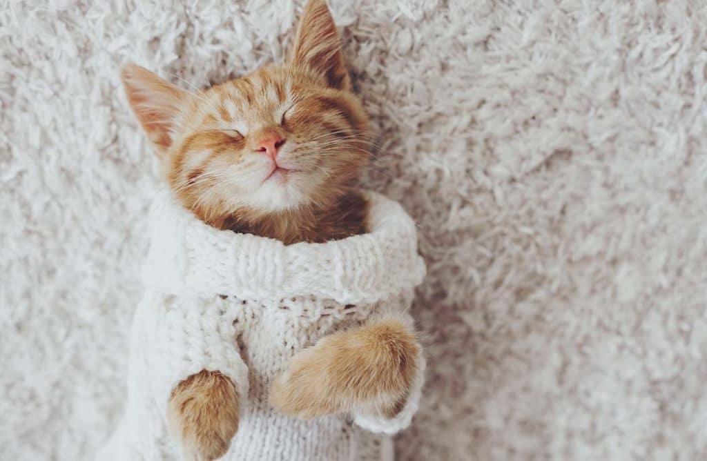 9 choses que vous ne savez pas (encore) sur les chats