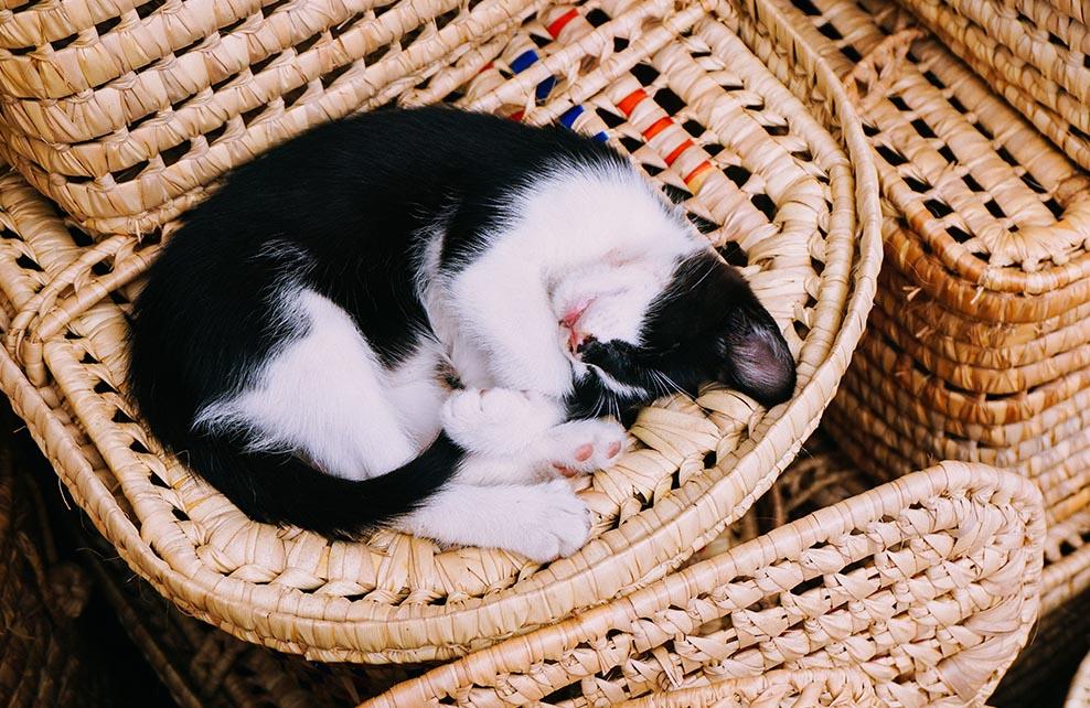 chat noir et blanc lové dans un fauteuil en paille