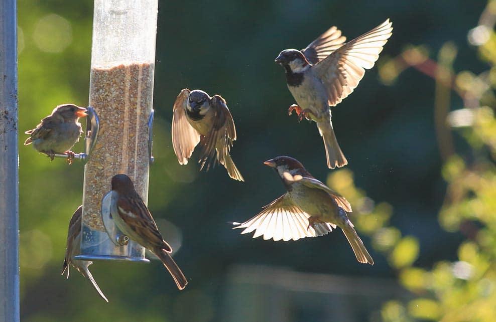 Comment bien nourrir les oiseaux de son jardin depuis - Comment attirer des oiseaux dans son jardin ...