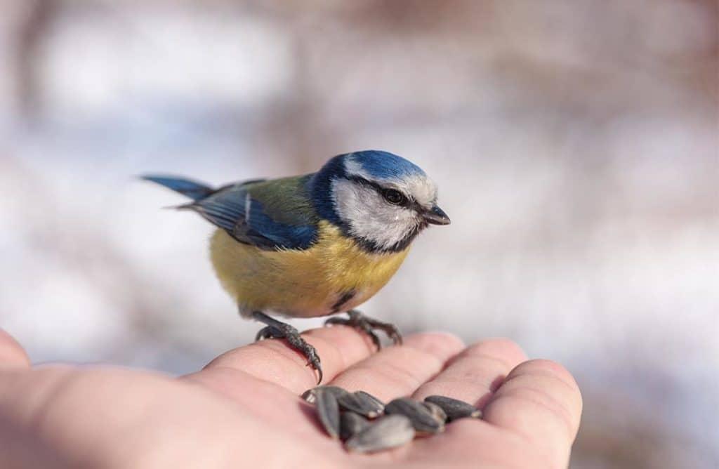 Comment bien nourrir les oiseaux de son jardin ?