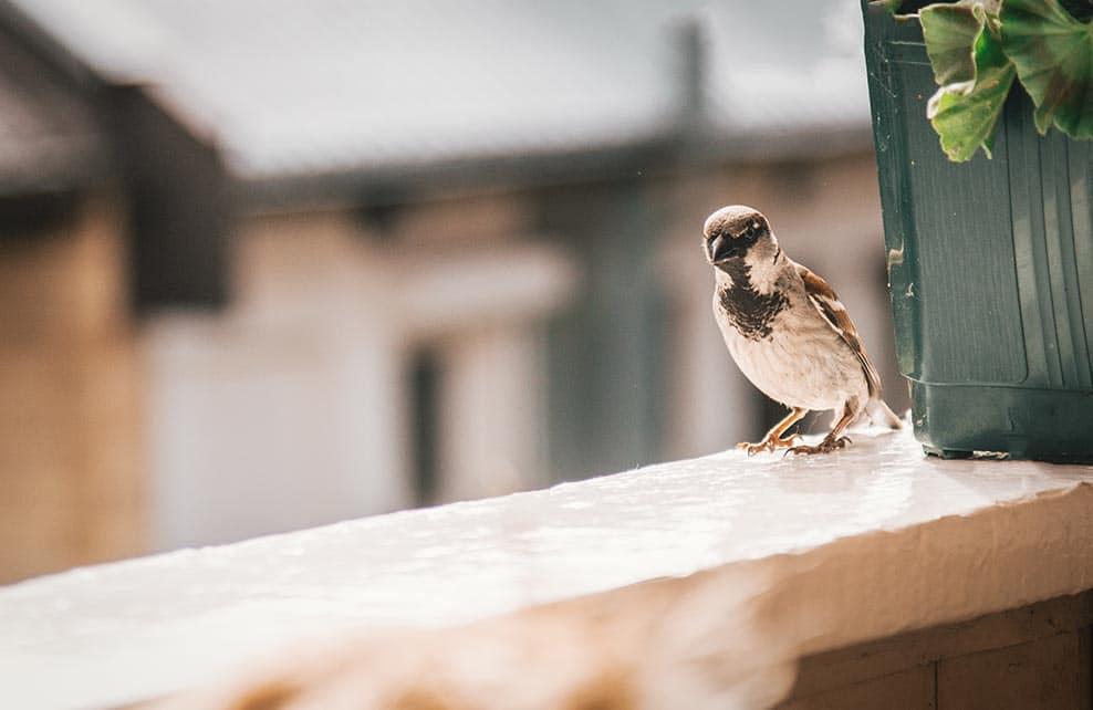 Comment bien nourrir les oiseaux de son jardin depuis - Comment faire fuir les taupes de mon jardin ...