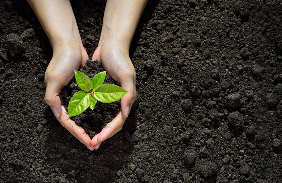 main entourant une jeune pousse de plantes