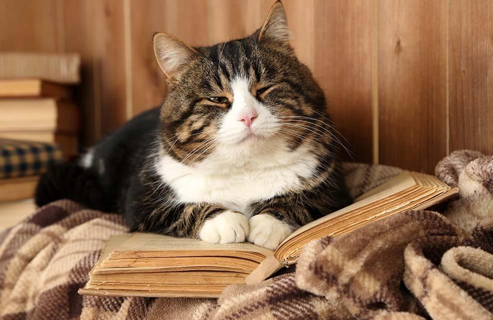 chat sur un vieux livre