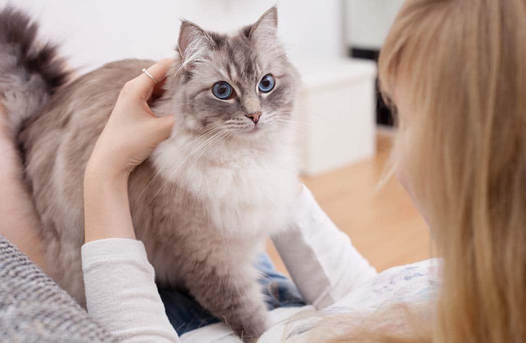Jeune femme faisant un câlin à son chat sur ses genoux