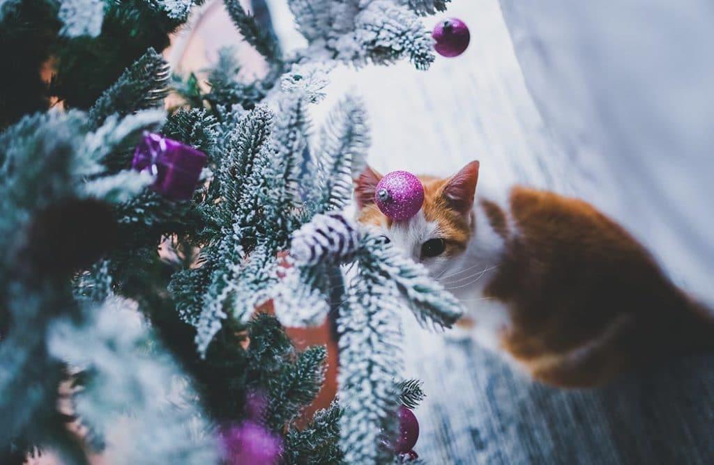 5 conseils pour passer les fêtes avec son animal de compagnie
