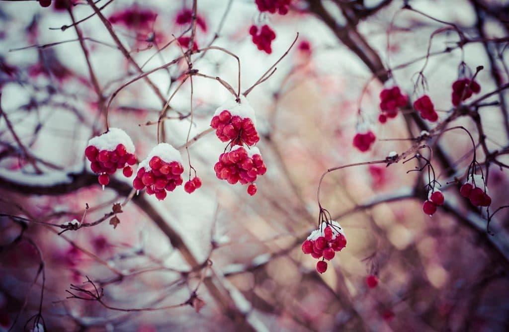 5 astuces pour donner de la couleur à son jardin en hiver