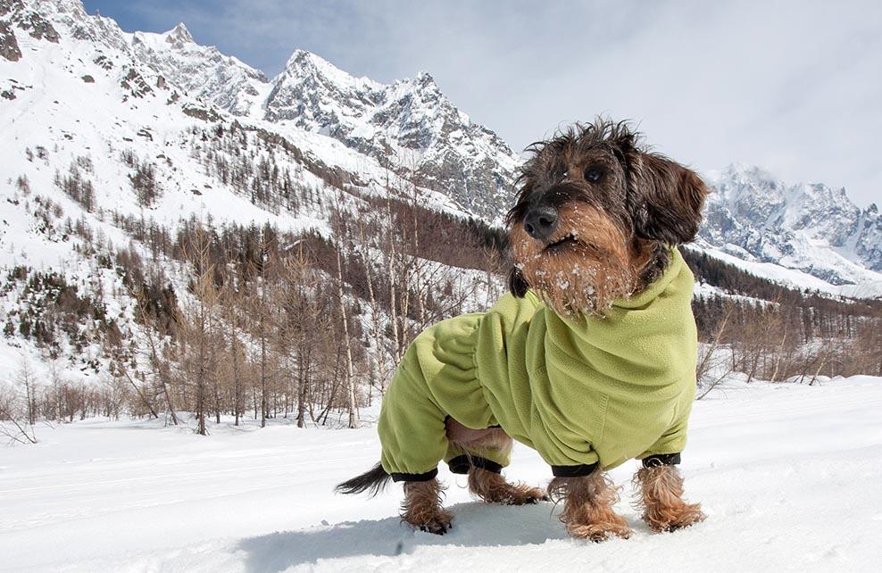 Petit chien avec un manteau en haut d'une montagne