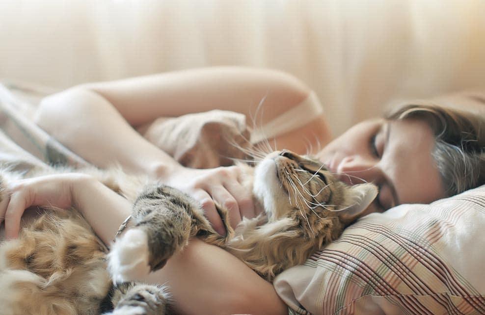 chat dans le lit et les bras de sa maîtresse