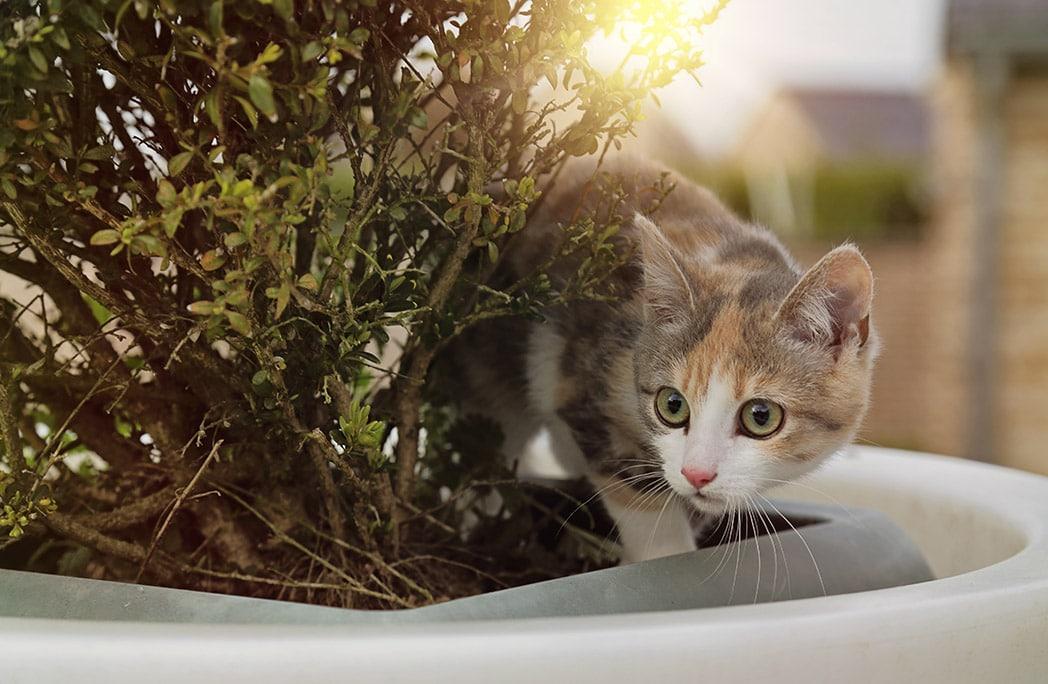 Votre chat et les plantes : que faire pour éviter qu'il