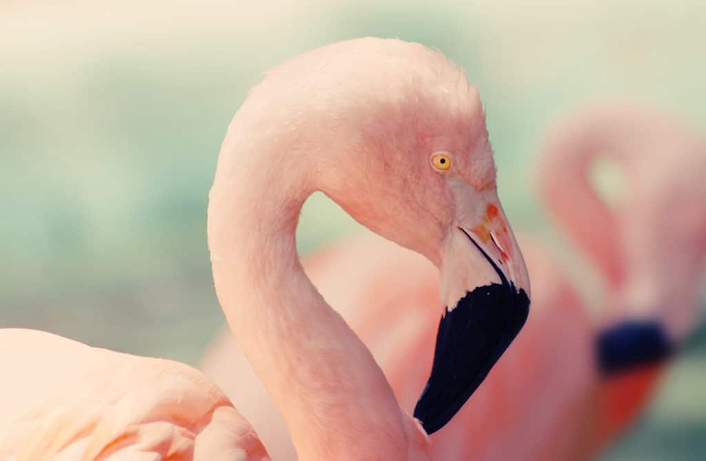 Alerte job de rêve : devenir soigneur pour flamants roses aux Bahamas