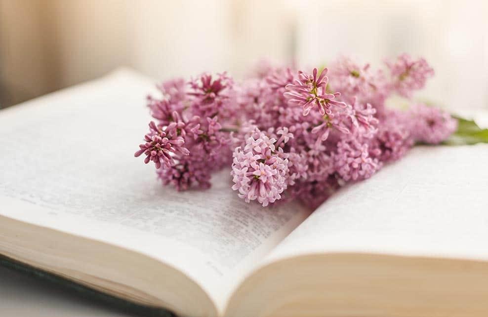 lilas posé sur livre