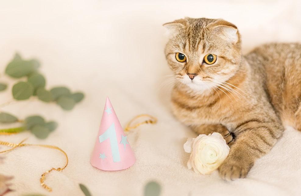 chat fêtant son premier anniversaire