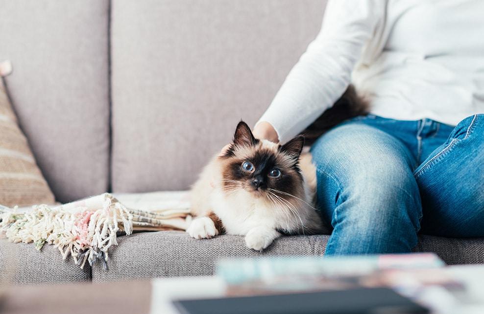 Femme sur canapé avec son chat siamois