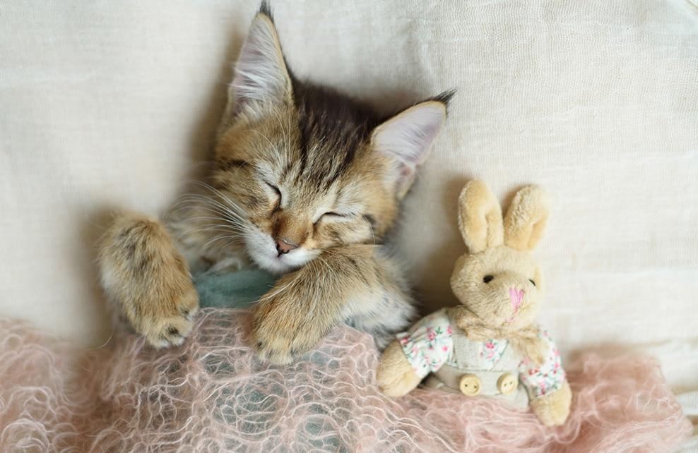 """Résultat de recherche d'images pour """"chat fqui dort"""""""