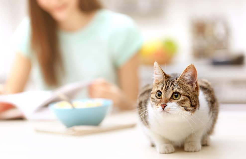 chat sur une table avec sa maîtresse ayant fini de manger en arrière plan
