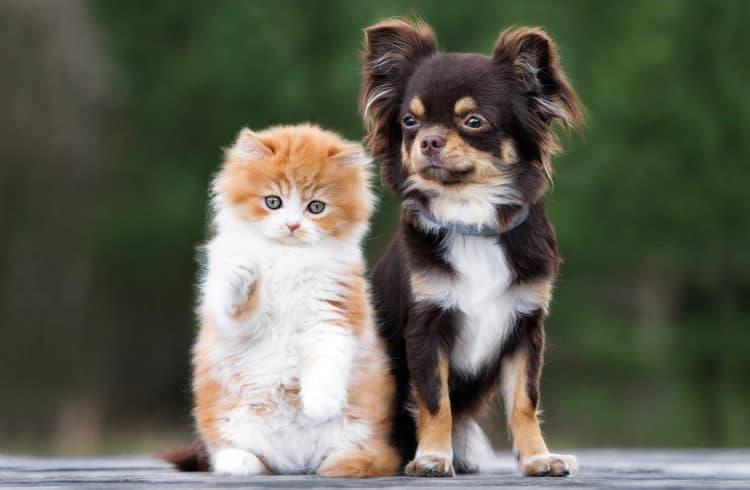Chien chat qui posent à côté l'un de l'autre