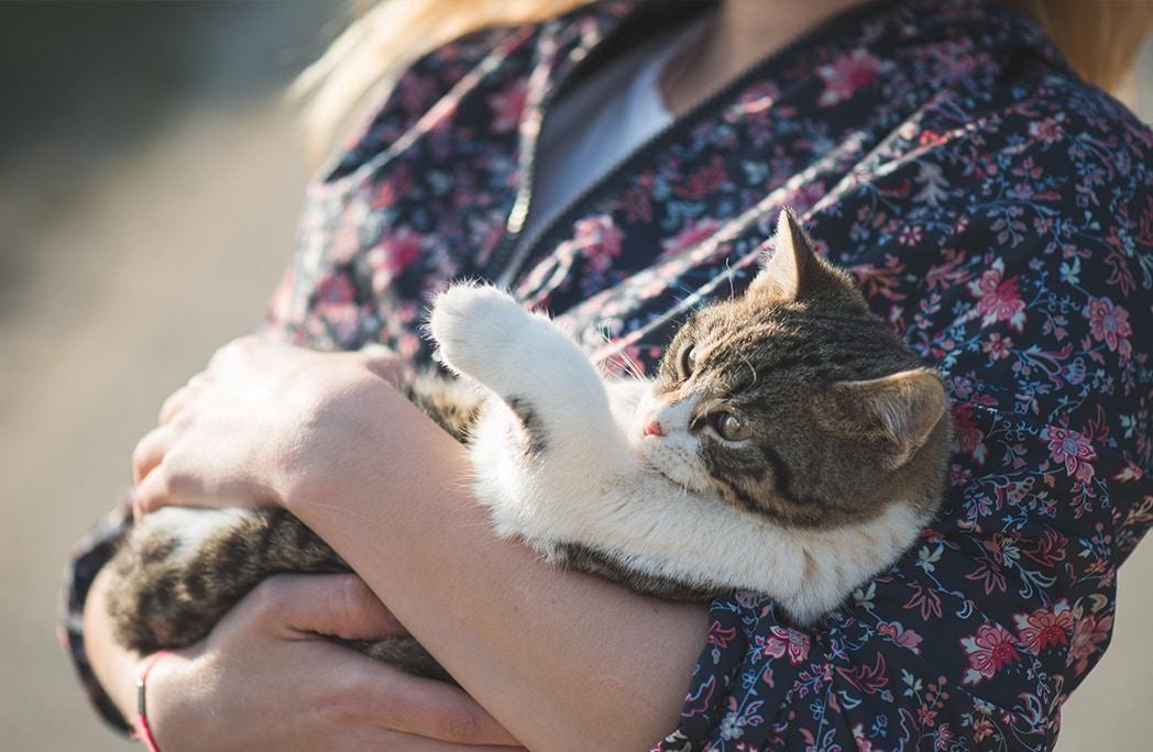 8 signes qui montrent que vous êtes (trop) gaga de votre chat