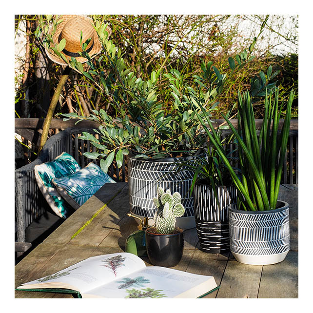 Accumulation de plantes sur une table de la terrasse