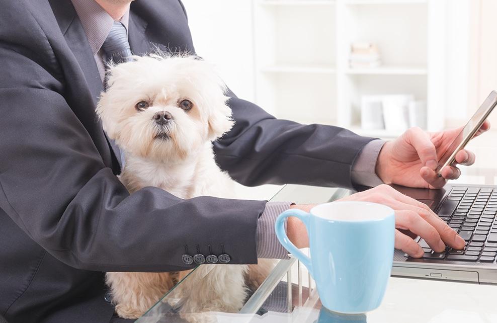 chien assis sur les genoux de son maître au bureau