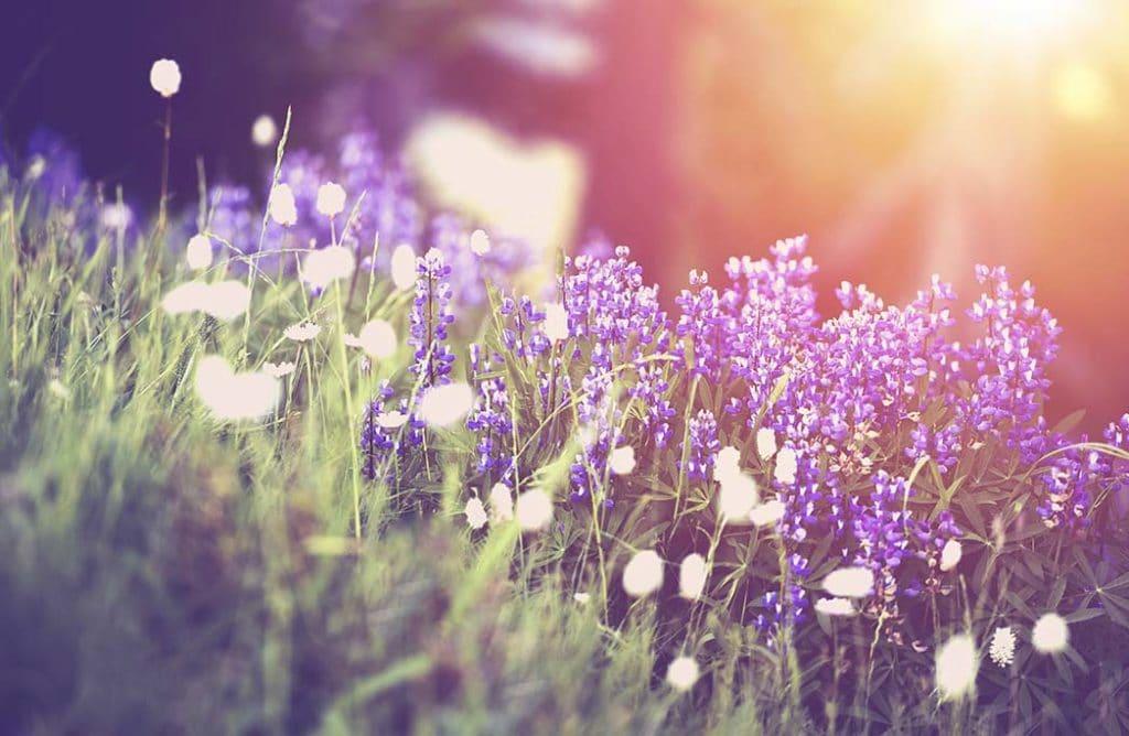 6 idées d'escapades pour fêter le printemps