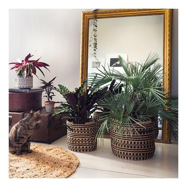Grand miroir dans une chambre avec plantes devant