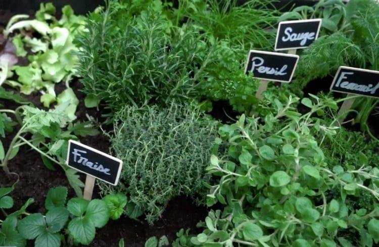 Jardinière d'herbes aromatiques