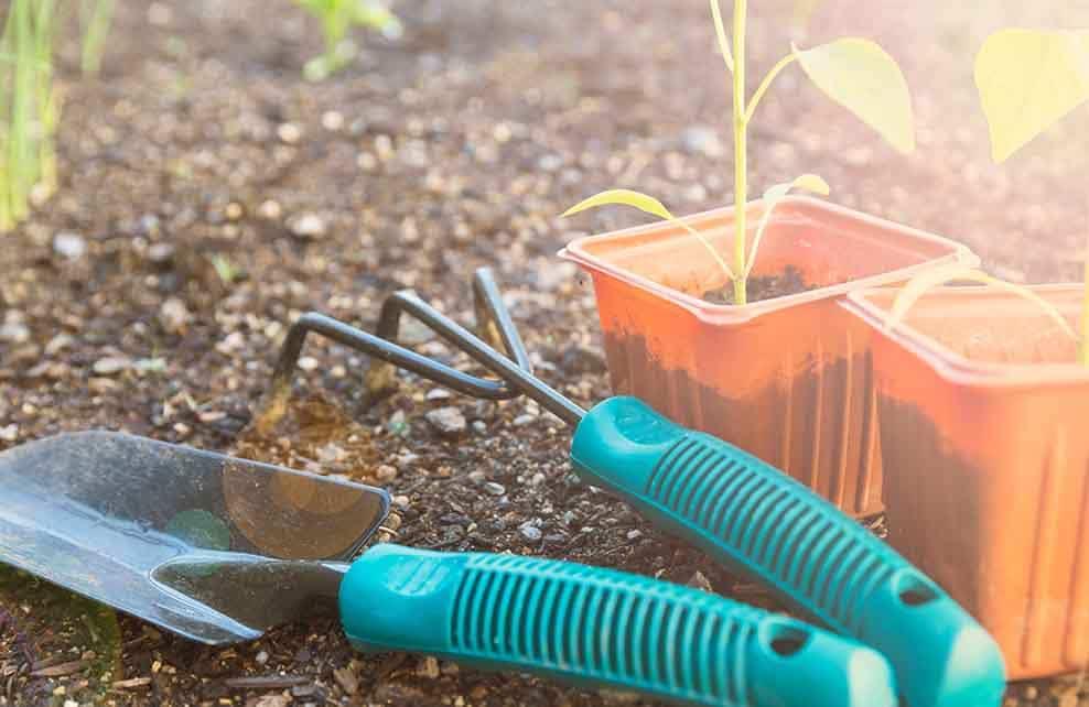 Outils et jeunes pousses prêtes à être plantées
