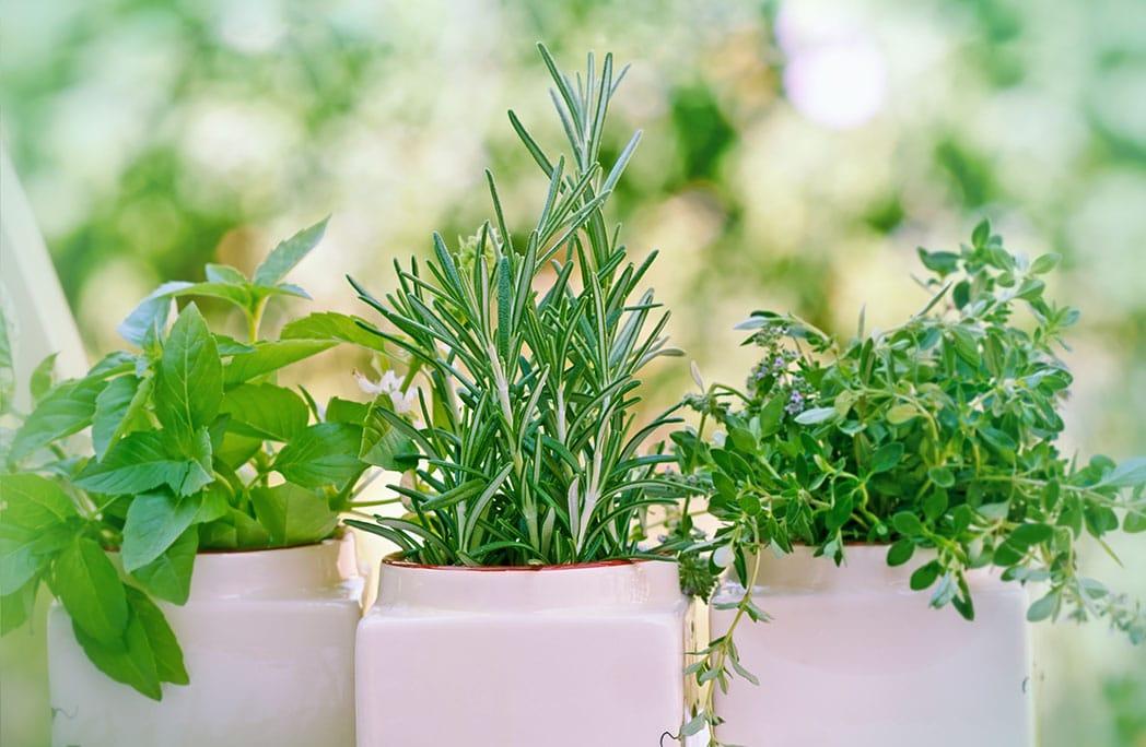 5 plantes thérapeutiques à cultiver chez soi