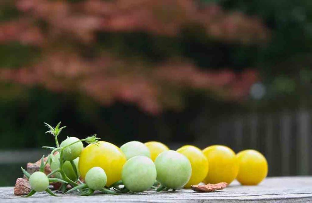 Top 6 des bonnes raisons de créer son jardin potager bio