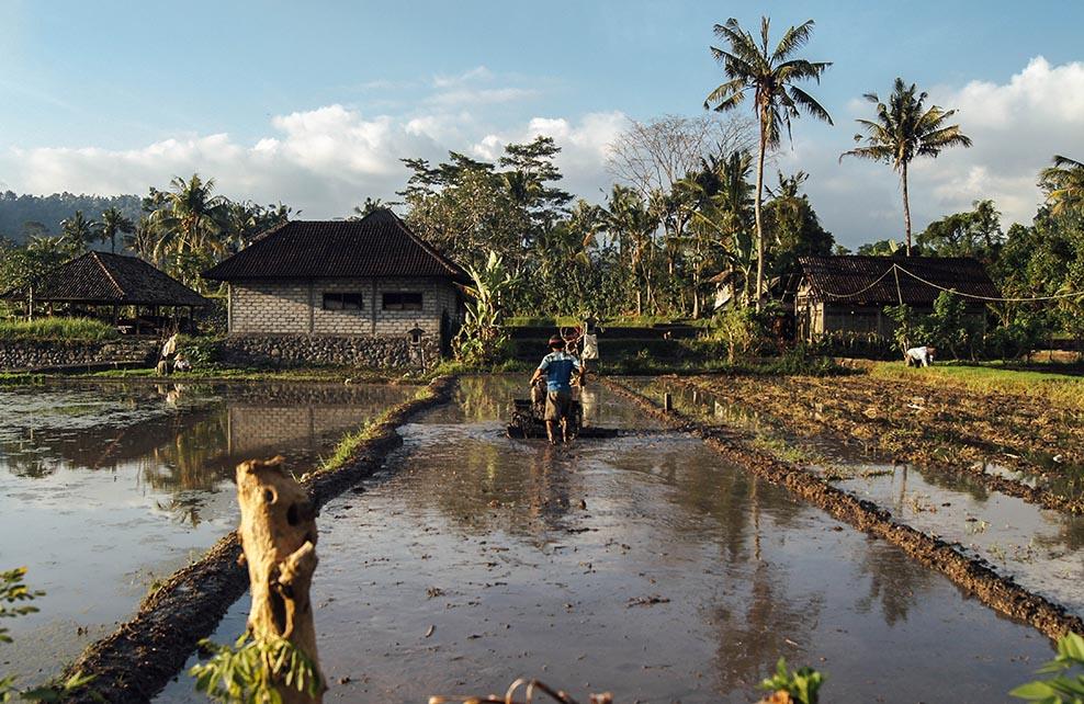Ferme en Asie du Sud-Ouest