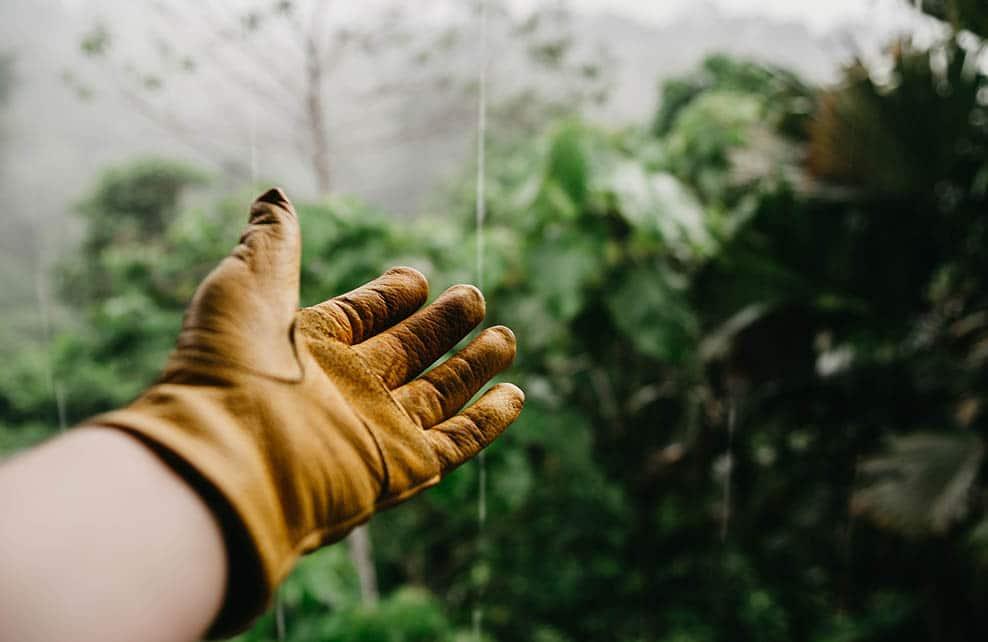 Main d'un jardinier avec un gant