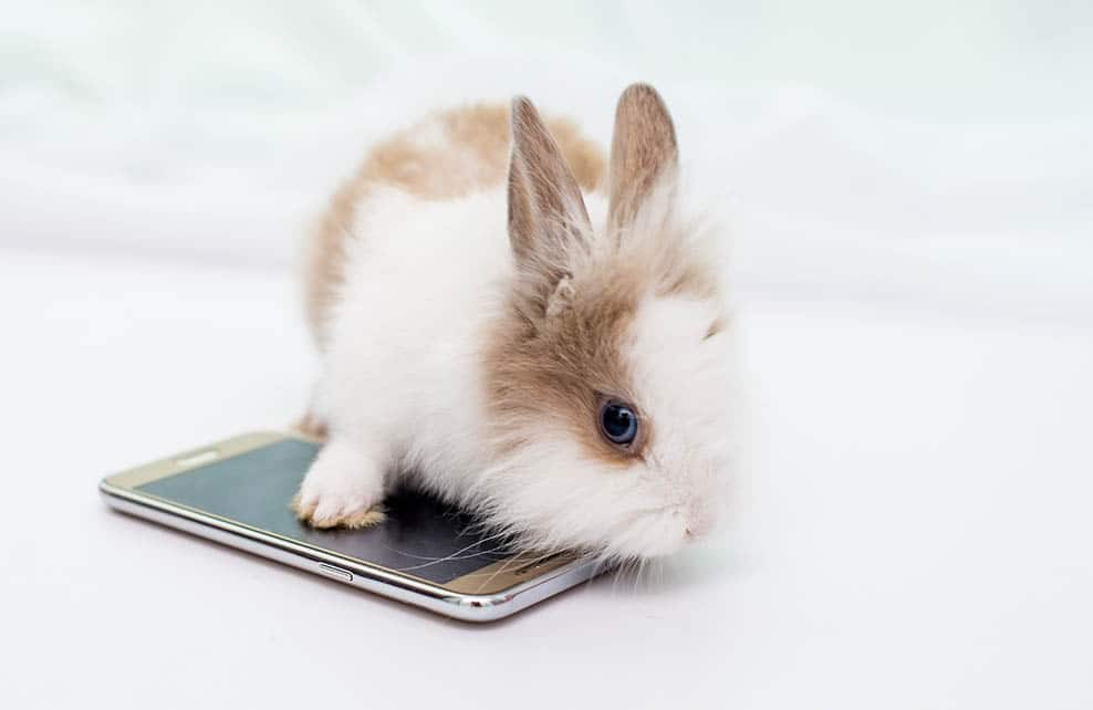 Lapereau sur un téléphone portable