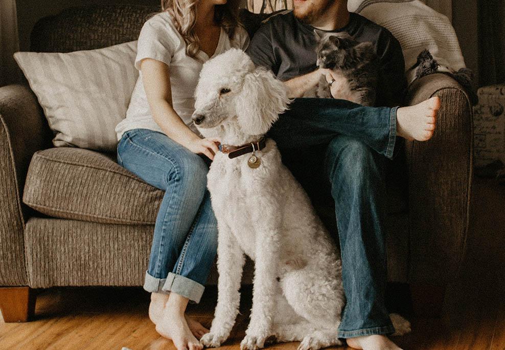 Couple assis sur un canapé avec leur chien et leur chat