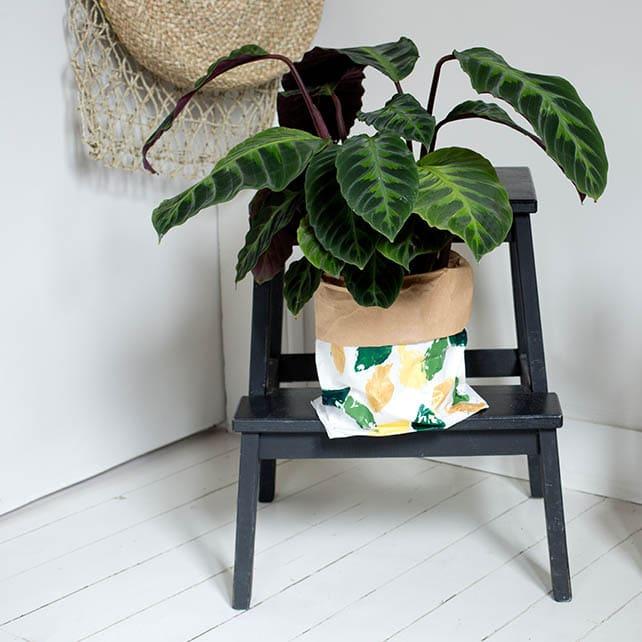 Plante dans un paper bag