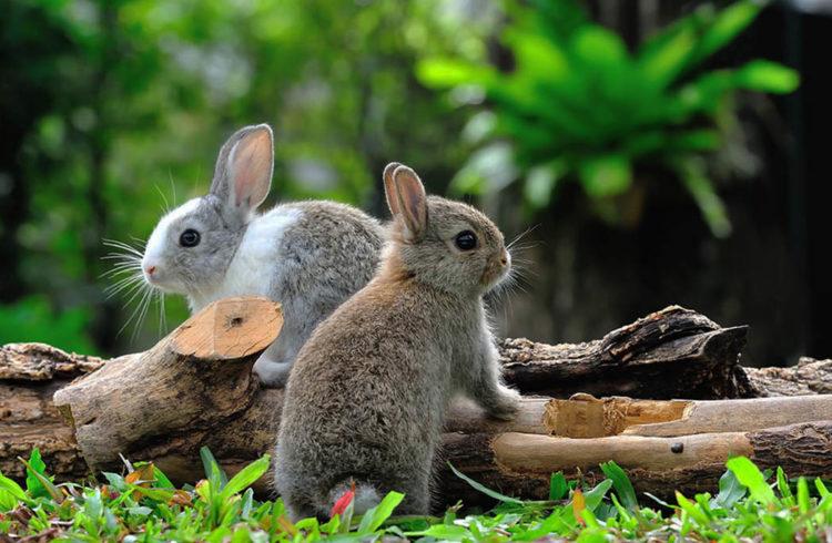 Deux lapins dans un jardin
