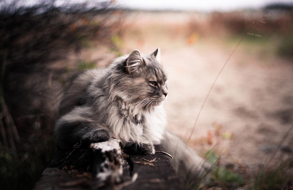 chat sur fond flou