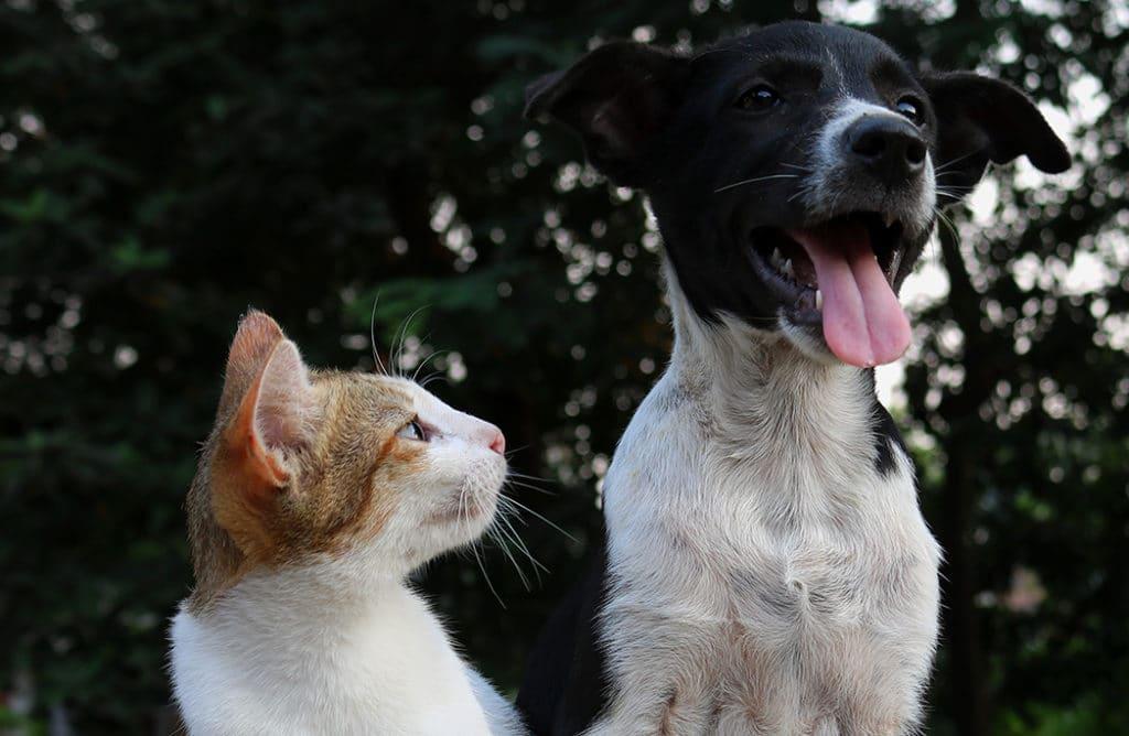 Pourquoi adopter un chien ou un chat âgé est une bonne idée