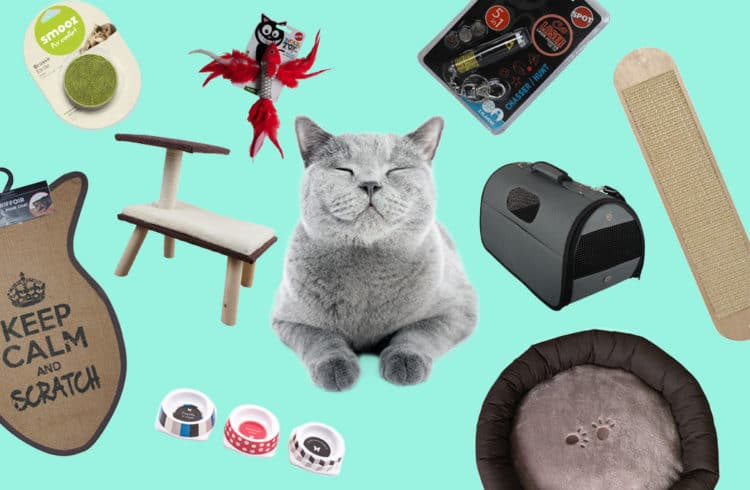 chat entouré de tous ses cadeaux