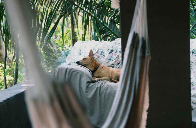 Chien assoupi sur un sofa sur une terrasse avec un hamac en premier plan